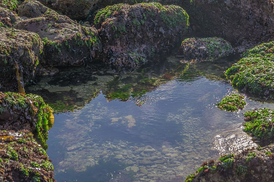 Life on earth might have had humble origins in tide pools like this.